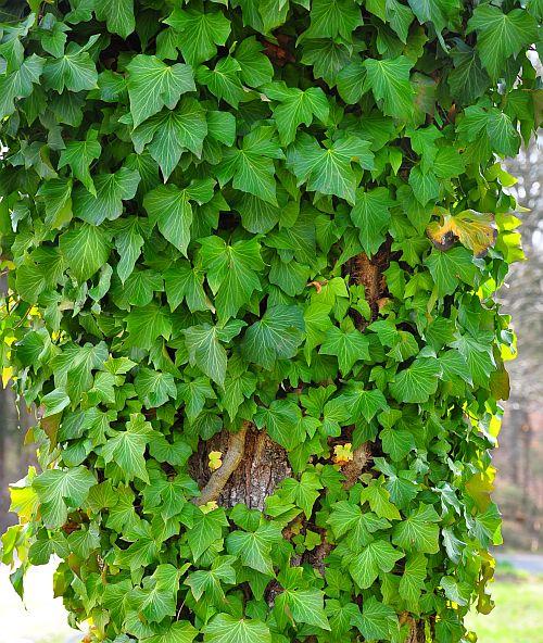 vines-set1